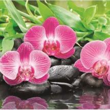 pvh-orhid